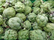 Freshly Picked Artichokes, A Product From The Garden To The Table. Vegetarian And Sustainable Product.