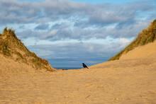 A Crow On A Sand Dune, At Formby Beach
