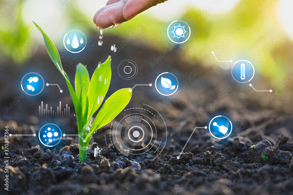 Fototapeta Farmer's hand watering a young plant, Modern agriculture with technology concept