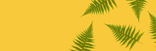 Branches Of Fern On A Yellow Background. Banner Template With Nature Concept.