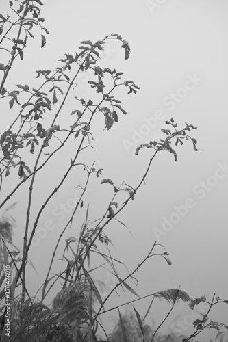 Fototapeta Dzika roślinność nad jeziorem we mgle obraz