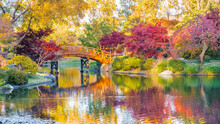 View Of Beautiful Japanese Garden In Midwest, USA,  At Sunset In Fall; Traditional Japanese Bridge Over Pond In The Background