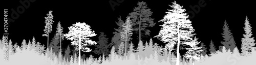 Fototapeta dark grey fir forest stripe isolated on black obraz