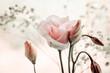 Pastelowe róże