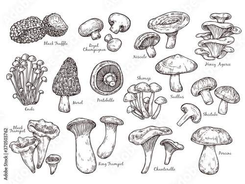Carta da parati Forest mushrooms sketch