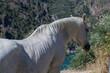 koń zwierze biały nakrapiany głowa grzywa