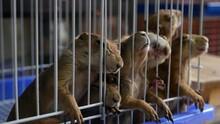 Unhappy Cute Prairie Dog Cub S...