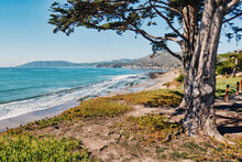 Oak Tree On Cliffs Pacific Oce...