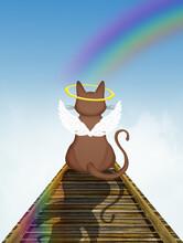 Cat On The Rainbow Bridge In The Heaven