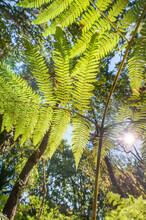 Sunlight Through Ferns