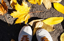 Gray Grey Sport Shoes Sneakers On The Background Of Dry Yellow Leaves On The Sidewalk In Autumn Fall On A Sunny Day.