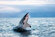 canvas print picture - Great White Shark, carcharodon carcharias, Adult Breaching, False Bay in South Africa