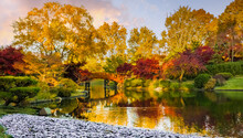 View Of Beautiful Japanese Garden In Midwest, USA, At Sunset In Fall; Traditional Japanese Moon Bridge Over Pond In Background
