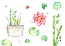 Aquatic Garden Illustration Watercolor