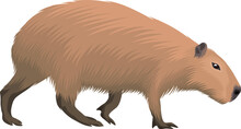 Vector Capybara Isolated On White Background