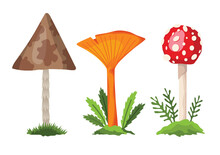Mushroom And Toadstool. Illustration Of The Different Types Of Mushrooms On A White Background. Flat Summer Forest Mushrooms Concept On Green Grass