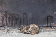 Kitty  Sleeping Near Dirty Door