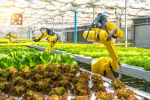 Futuristic Robotic Arm For Agriculture.smart Farm Automation Robot Assistant With Hydroponic Technology.