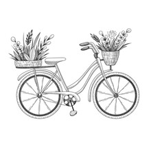Vector Vintage Illustration Of Hand Drawn Bicycle With Floral Basket Plants, Herbs, Leaves And Branches Isolated On White Background