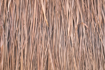 Thatch roof background, hay or dry grass background