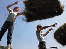 Harvesting Hay Balls