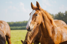 A Beautiful Red Or Brown Horse...