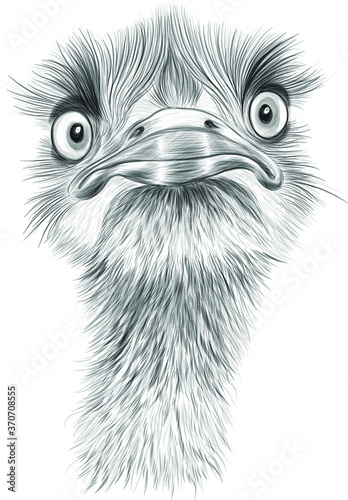 Foto head of the ostrich sketch black and white is a funny bird vector illustration