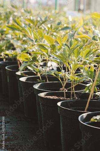 Beautiful green plants in shipping pots in a garden store Fototapete