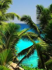Panel Szklany Podświetlane Drzewa Seychelles, La Digue Island, Patates Cove, Patates Beach