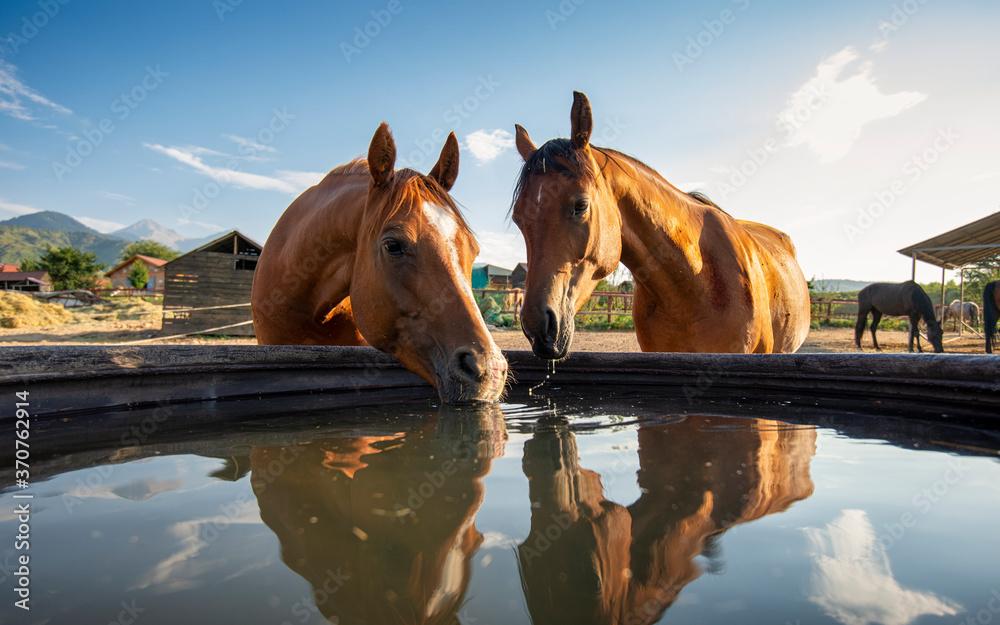 Fototapeta horse in the water