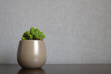 Green Euphorbia Susannae Succulent Plant Growing In Ceramic Vase Isolated On Clean Background Placed Off-center A Shelf. Minimalist Setting In Sober Earth Tones With Empty Space For Text On The Right