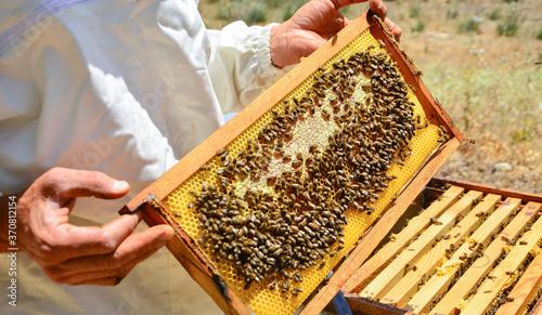Leinwand Poster honey harvesting beekeeper