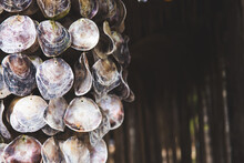 Hanging Decor Made Of Shells. ...