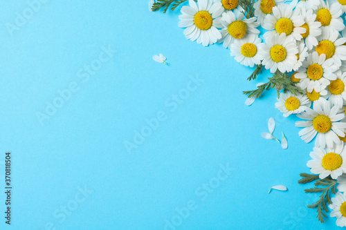 Fotomural Flat lay composition with fresh chamomiles on light blue background