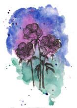 Anemones Flowers. Hand Drawn I...