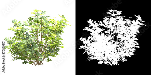 Obraz na plátne Left  view of tree (Ficus Carica) png with alpha channel to cutout 3D rendering