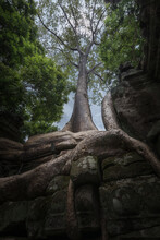 From Below Of Old Stone Buddhist Temple Covered With Roots Of Large Trees In Cambodia