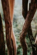 Spider Web Between Tree Branch...