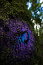 Closeup Of Dangerous Scorpion Sitting On Mossy Tree Trunk In Woods And Illuminated By UV Light