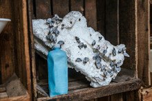 Blue Plastic Jar Placed Near Piece Of Cement With Plant Seeds On Wooden Shelf Representing Ecology Concept