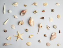 Different Beautiful Sea Shells...