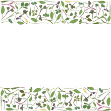 Vector Frame With Microgreen. ...