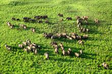 Democratic Republic Of Congo, Aerial View Of Herd Of Elephants InÔøΩGaramba National Park