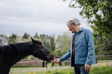 Senior Man Feeding A Horse On A Farm
