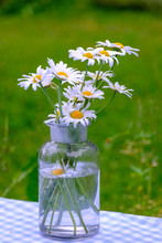 Close-up Of Oxeye Daisies In Bottle On Table At Park