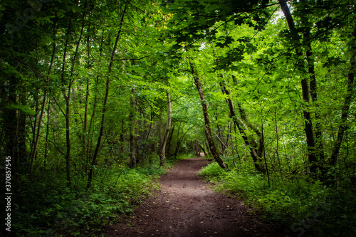 A narrow footpath in  a green deep and thick summer forest with maple tree in th Fotobehang