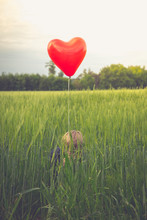Little Boy With Red Heart-shaped Balloon Hiding In A Field