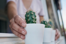 A Hand Holding Some Cactus