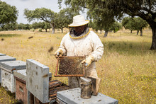 Beekeeper Checking Beehive In Apiary