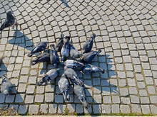 Gruppe Tauben Von Oben Fotogra...